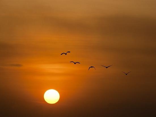 «График» перелетных птиц сдвинулся из-за климата
