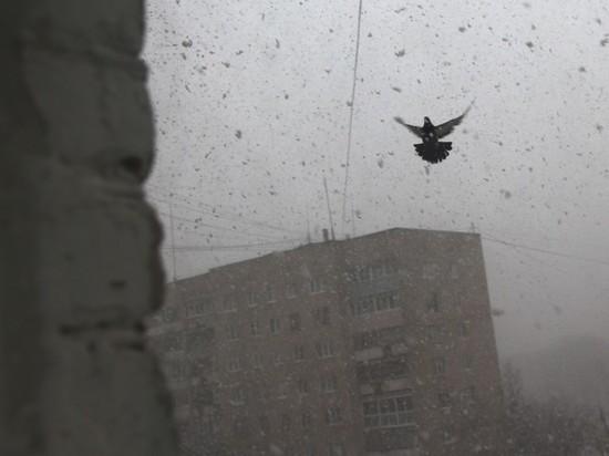 """В Москве объявлена """"желтая погодная опасность"""": идет буран"""