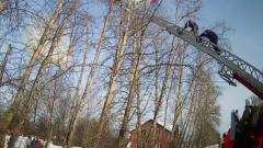 В Кирове спасатели сняли с дерева парашютиста: видео