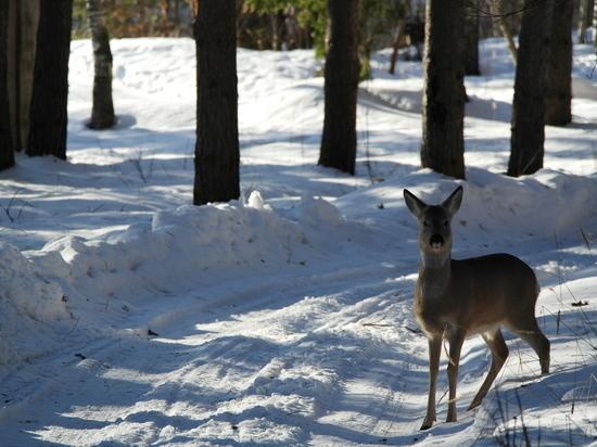 В Нижегородской области построят переходы для животных на трассе М-12