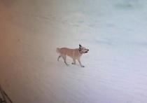 У покусавшей детей собаки в Аксарке подозревают бешенство