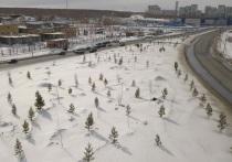 В Челябинске завершена высадка крупномерных деревьев