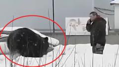 Погнавшийся за прохожим медведь из Нижневартовска попал на видео