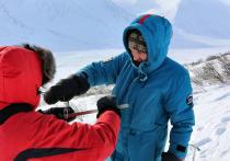 Снежным баранам будет комфортно на Ямале: десять толсторогов переедут в регион