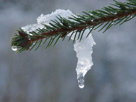 До +5 градусов потеплеет 19 марта в Алтайском крае