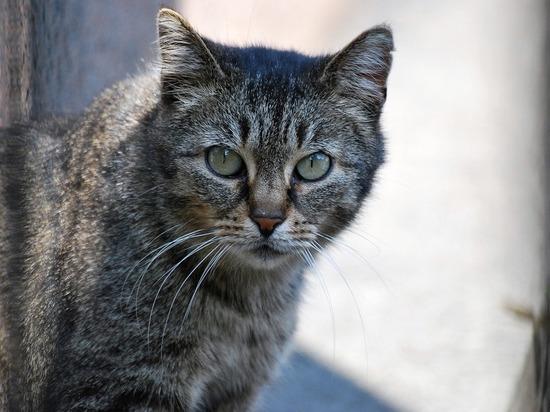 Что делать с трупами котов и собак, рассказали псковичам