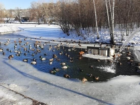 В барнаульском парке «Изумрудный» хотят сделать незамерзающий пруд с утками