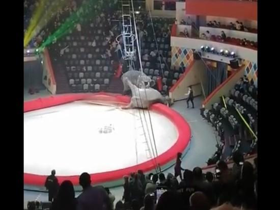 Слоны устроили драку в казанском цирке