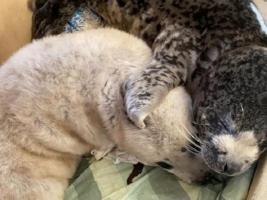 От того, как поведут себя люди, во многом зависит - будет ли у тюленят шанс на жизнь