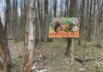 Тульская область вошла в число регионов с минимальным количеством незаконных вырубок леса