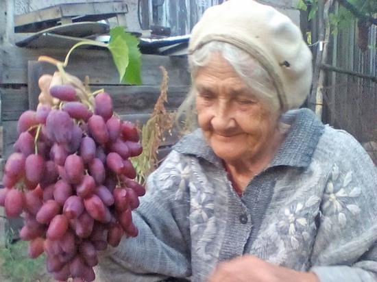 Волгоградка выращивает на шести сотках участка 60 сортов винограда