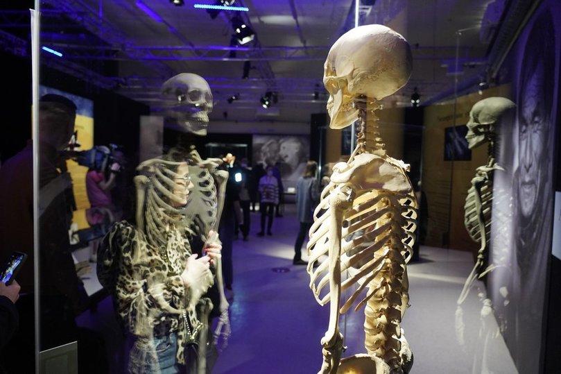Закрыть скандальную выставку на ВДНХ можно с помощью родственников экспонатов