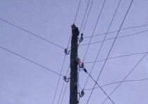 Застрявшего на столбе линии электропередач кота спасли в Удмуртии