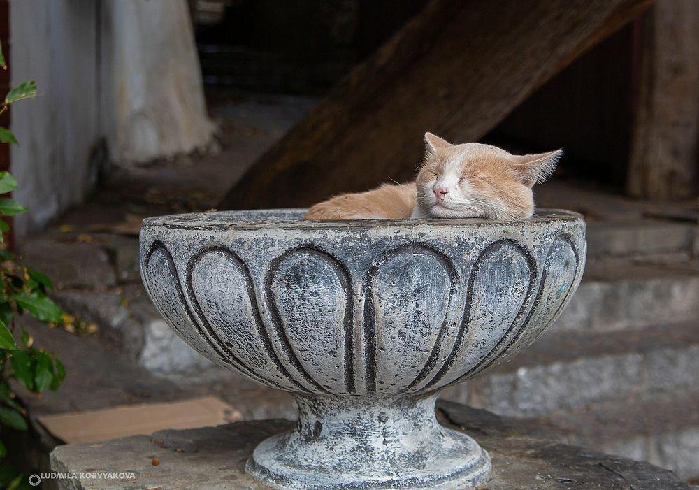 Коты в Крыму представляют собой отдельную достопримечательность