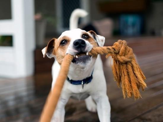 Ветеринары назвали самые частые проблемы у питомцев