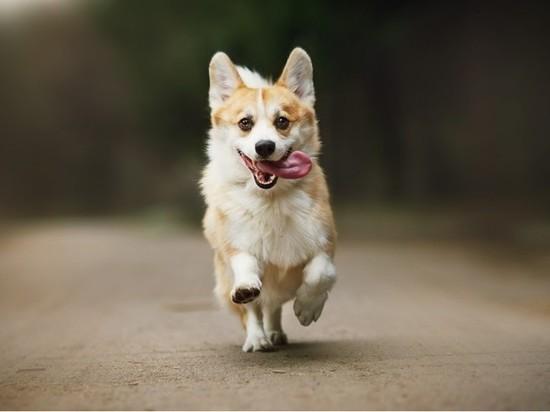 Топ: самые дорогие породы собак Петербурга