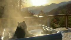 Туристы из США сняли на видео купание медведя в джакузи