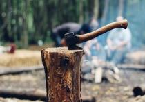 Из-за уничтожения лесов быстрее распространяются инфекции