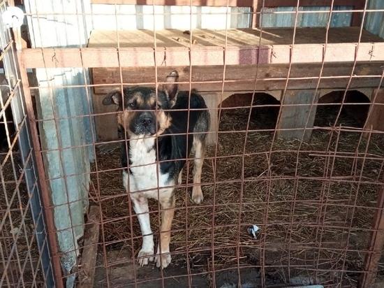 В Петрозаводске отлавливают бездомных собак