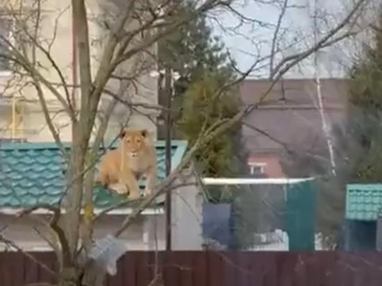 Хозяйка хищницы заняла чужое машино-место, и соседи решили ей отомстить