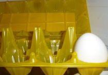 Птицефабрика омского депутата выпустила первую партию яиц после ЧП с птичьим гриппом