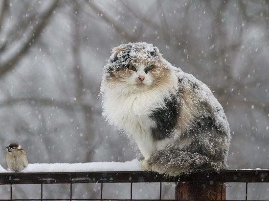 В Хакасии снова пойдёт снег
