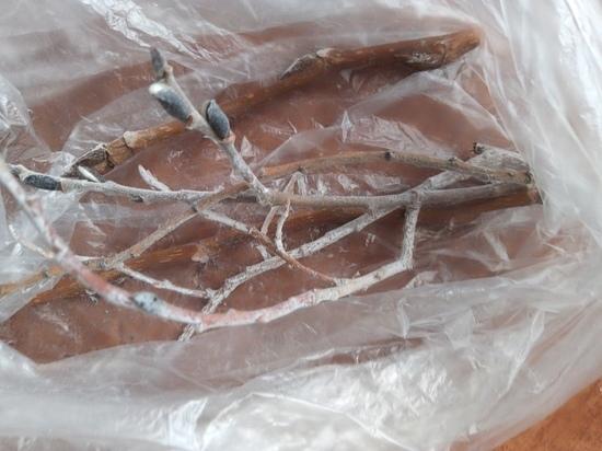 Жители Сегежи пожаловались на странный белый налет: Росприроднадзор проведет проверку