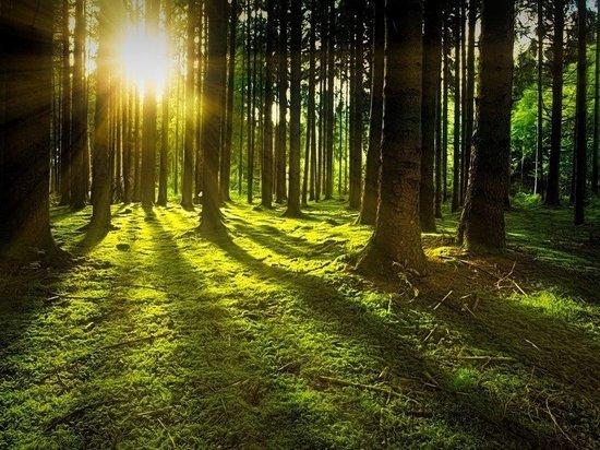 Саудовская Аравия посадит 10 млрд деревьев в рамках программы озеленения