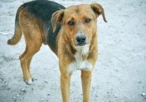 В Вихоревке дротиками с ядом расстреляли четырёх бродячих собак