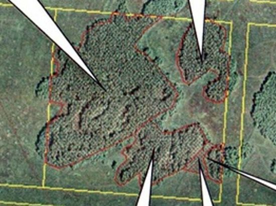 Прокуратура: участки омских лесов на Волгоградской не поставили на учёт незаконно