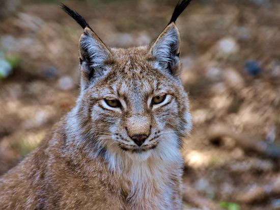 Косули, северные олени, рыси: в Васюганском заповеднике прошла перепись животных