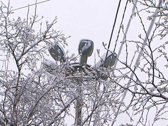Сковородинский район третий день засыпает мокрым снегом