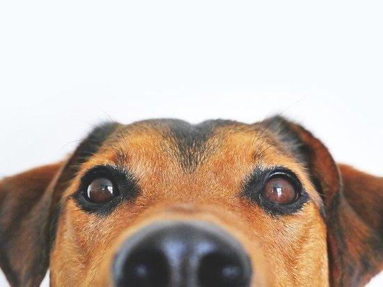 В Кузбассе заведено уголовное дело на двух братьев, зарубивших в подъезде собаку