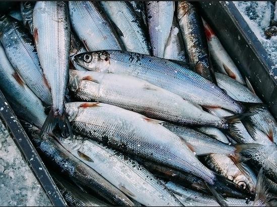 На Байкале задержали двух рыбаков, незаконно наловивших омуля на 800 тысяч