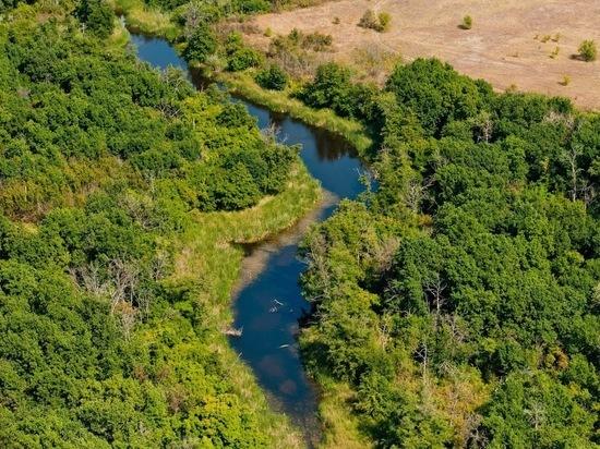 В апреле леса в Волгоградской области начнут обрабатывать от вредителей