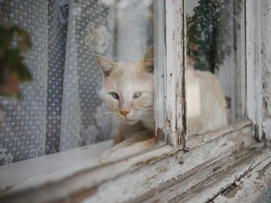 В двух населенных пунктах Калмыкии отменили карантин по бешенству