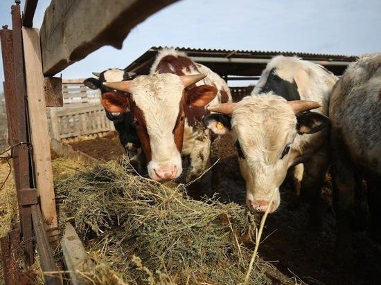 В Волгоградской области у 20 сельхозживотных выявлен бруцеллёз
