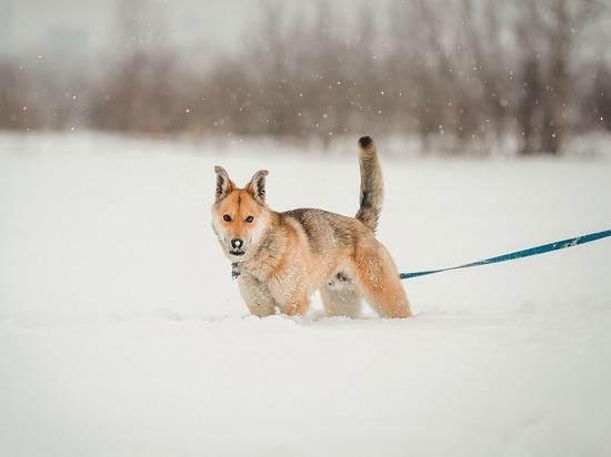 Хозяин агрессивной собаки в Лабытнанги заплатит укушенному ребенку больше 30 тысяч