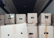 В Оренбуржье задержали телят, которых незаконно везли в Киргизию