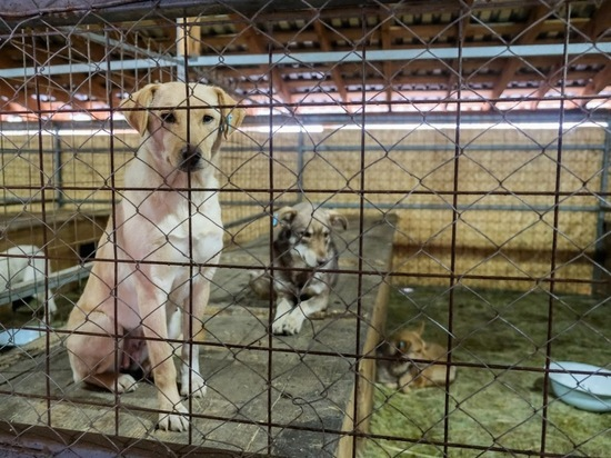 Астраханец подал иск мэрии города после нападения бездомного пса