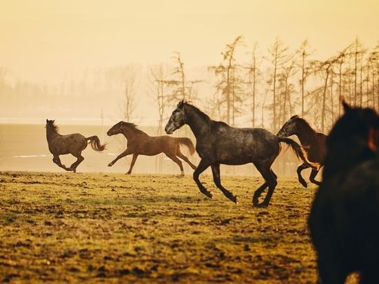 Алтайский полицейский, развлекаясь, расстрелял табун лошадей