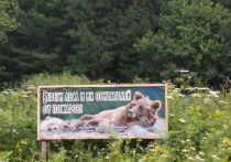 «Красный петух» над бором: пожароопасный сезон начнется в Алтайском крае уже с 9 апреля