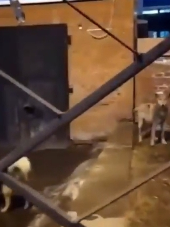 Молодого волка поймали на территории детдома в Иркутске