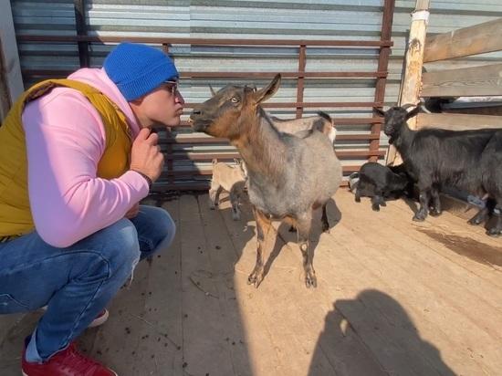 Пятеро козлят родились в барнаульском зоопарке