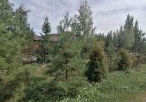 После зимнего пожара власти решили дополнительно озеленить омский дендропарк