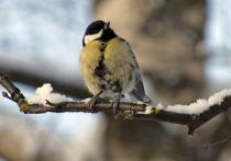 В Москве начался апрель, и люди обратили внимание на отсутствие пения птиц