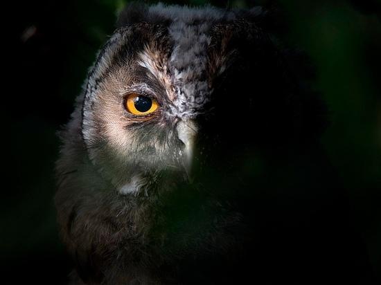 В Смоленске состоится встреча с орнитологами