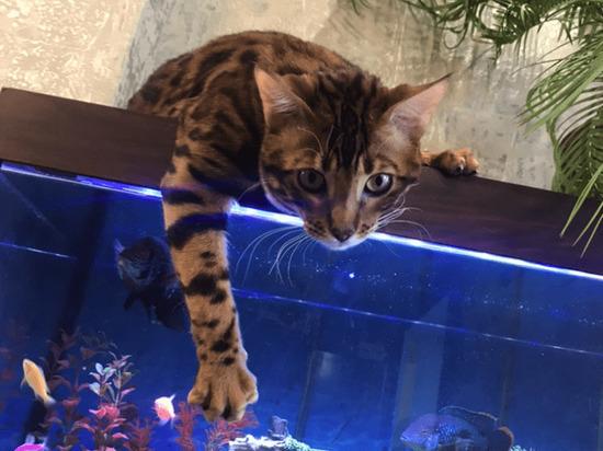 Главным котиком Омска на уходящей неделе стал рыболов Томми