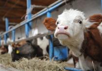 В Астраханской области не допущен ввоз 12 тонн животноводческой продукции без маркировки
