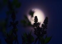 """Колумнист """"МК в Туле"""", агроном-плодоовощевод  с 42-летним стажем Людмила Калинина проанализировала данные популярных у садоводов и огородников лунные календари и пришла к выводу - они совершенно бесполезны."""